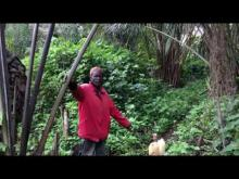 Embedded thumbnail for Palm Wine Production