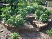 "Embedded thumbnail for ""Kitchen Gardens"" are a solution to malnutrition in Rwanda"