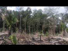 Embedded thumbnail for La Deforestación.