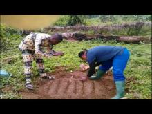 Embedded thumbnail for Family Farm Schools and the promotion of self-employment among youngsters in Cameroon.